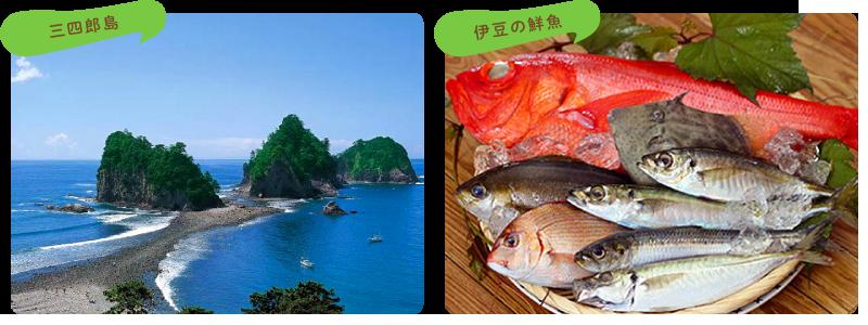 三四郎島・伊豆の魚